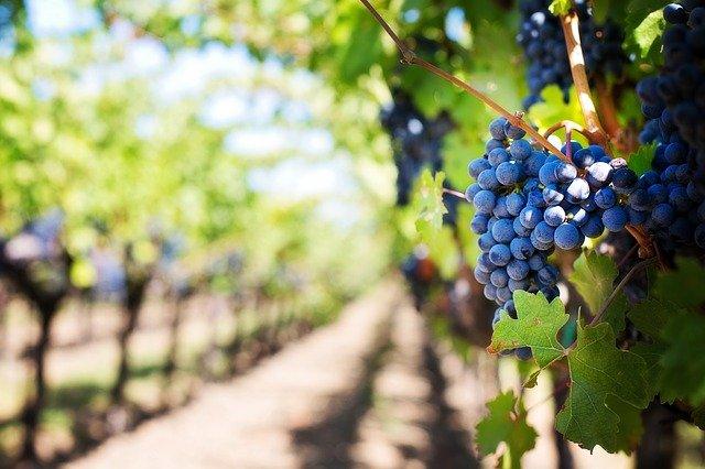 Visiter des régions pour trouver en France des vins prestigieux